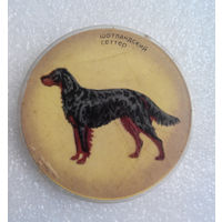 Значок. Собаки. Шотландский сеттер #0150
