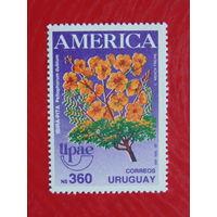 Уругвай. Флора