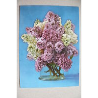 Цветы; 1974, чистая (ГДР).