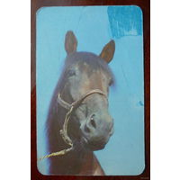 "Календарик ""Лошадь"""