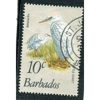 Барбадос. Египетская цапля
