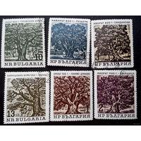Болгария 1964 г. Вековые деревья.