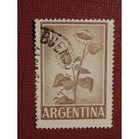 Аргентина. Подсолнух
