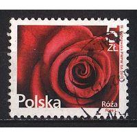2015 - Польша - Стандарт - Роза Mi.4789 _3.40 EU