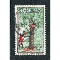 Нигерия. Сбор кокосов