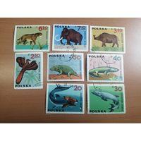 1966 Доисторические животные (Польша) 8 марок
