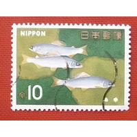 Япония. Рыбы. ( 1 марка ) 1966 года.