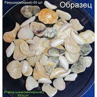 Ракушки разные(50 шт.)