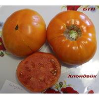 Семена томата Клондайк