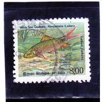 Шри-Ланка. Mi:LK 934A. Горный Лабео (Labeo fisheri). 1952.