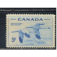 GB Канада 1955 Гусь американский Стандарт #301*