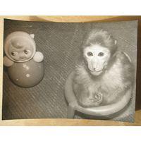 "Фото обезьянки. ""Да... я пошла на горшок. Ну и что"""