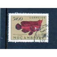 Мозамбик.Ми-400. Фауна. Краснокожая рыба-Redskinfish.1951.