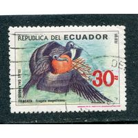 Эквадор. Птица Великолепный фрегат