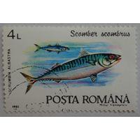 Румыния.1992.скумбрия