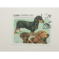 Куба 1992. Собаки