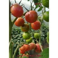 Семена томата Dwarf Balkan Tiger