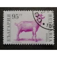 Болгария 1992 коза