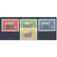 [814] Уругвай 1967.Фауна.Овцеводство.