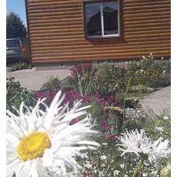 Деленка. Многолетняя садовая ромашка (Нивяник)