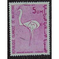 Мавритания.  Фауна 1975г.