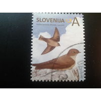 Словения 2014 стандарт птицы
