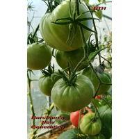 Семена томата Новое Поколение Бурчема(Burcham s New Generation)