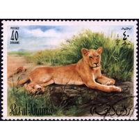 Кошки. Рас-Аль-Хайма. 1978. Львы. Марка из серии. Гаш.