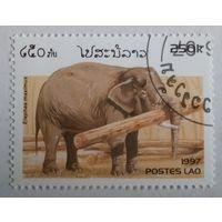 Лаос 1997. Слон