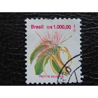 Бразилия. Флора.
