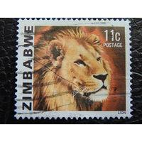Зимбабве. Лев.
