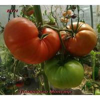 Семена томата Томатный монстр