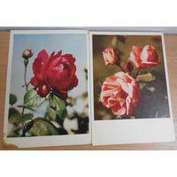 Открытки г. Калинин 1962-63г. Розы