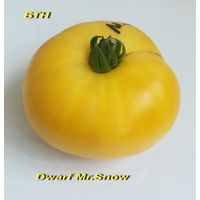 Семена томата Dwarf Mr.Snow