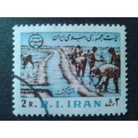 Иран 1981 годовщина Исламской революции, сельское хозяйство