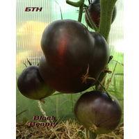 Семена томата Black Beauty (Черная Красавица,США)