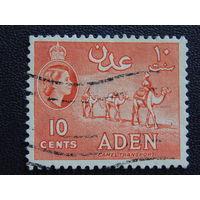 Британская колония Аден. Королева Елизавета II. Караван верблюдов. 1953г.