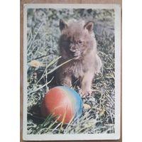Игнатович Е. Красный волчонок. 1963 г. Чистая.