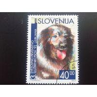 Словения 1992 собака