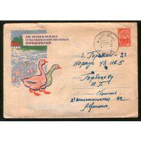 1962 ХМК ГОМЕЛЬ, СГ Неделя письма