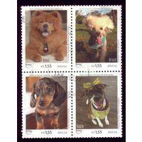 Квартблок Бразилия Собаки