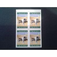 Туркменистан 2004 стандарт, собака квартблок