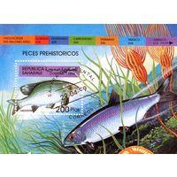 Республика Сахара. Ископаемые рыбы.1999