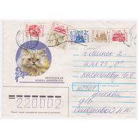 Конверт СССР, прошедший почту. Персидская кошка шиншилла