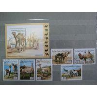 Марки - фауна, Сахара, верблюд, лама, блок и 6 марок