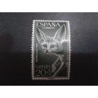 Сахара 1960 колония Испании фенек