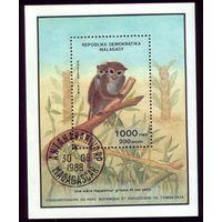Блок и 3 марки 1988 год Мадагаскар Зверинец 77 1129-1131