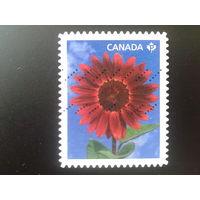 Канада 2011 цветок