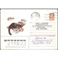 1985 год ХМК В.Бейлин Харза 85-381