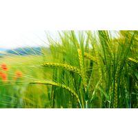 Курсовая - Рентабельность производства продукции растениеводства и пути ее повышения - Организация производства